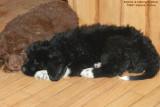 Sophie Bear & Sibling