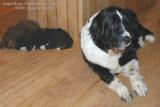 Sophie Bear, Sibling & Mom