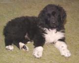 Sophie At 9 1/2 Weeks