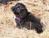 Hay Sophie Bear
