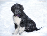 Sophie Bear Sitting In Snow