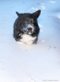 Running Bear! Sophie Bear