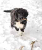 Mom, I Have Another Stick!