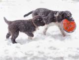 Sophie & Pepper In Snow Flurries