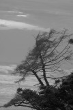 Wind Swept Trees