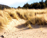 Sand, Grass, And Trees