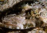 Crocodile Fish 2.jpg