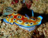 Nudibranch 1.jpg