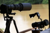 Kinabatangan - Nikon D2X and 500mm (left) D200 and 300mm (right)