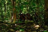 Kinabatangan - Group of Nikon Snipper at Kinabatangan.