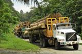Danum- Logging trucks on the way from Danum Valley