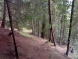 Afdalng door het bos richting Virgen