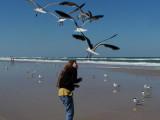 JPG CCaS Gull Attack P4076442.jpg