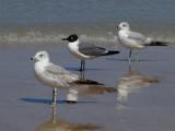 JPG CS Three Gulls P4076435.jpg