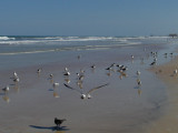 JPG CS Beachcombers P4076438.jpg