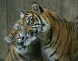 The Big Cats,Tropical Birds&Others