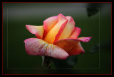 Gather ye rose-buds while ye may...