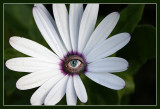 Eye Spotted a Flower