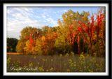 Fall in Blazing Glory