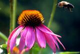 1 Flower, 1 Bee, 1 Me
