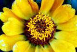 One Flowering Nest