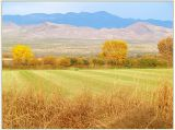 Bosque del Apache farm loop landscape