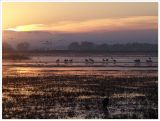 Sunrise, Bosque del Apache NWR
