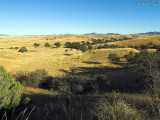 Patagonia, Arizona - American Savanna