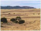 San Rafael Valley National Grasslands