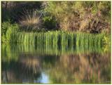 Gilbert Water Ranch Riparian Area