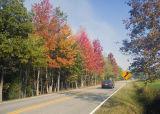 Dora Al Fall Road