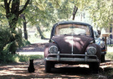 1972 - Black Cat and a Bug
