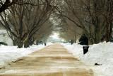 Snow Cleared Sloan IA