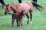 Mother and Colt, Near Norway KS