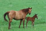 Mother and Colt, Springtime