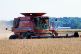 Combining the fall crop