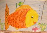 fish, Coco, age:6