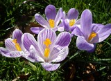 Kew Spring