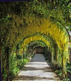 Laburnam Walk Kew Palace