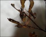 ICE WEB 4