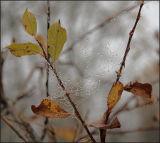 ICE WEB 6