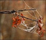 ICE WEB 8
