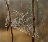 ICE WEB 10