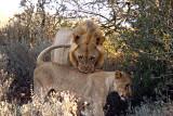 SOUTH AFRICA SHAMWARI