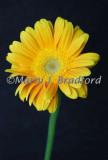 flowers3wtmk.jpg