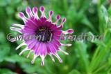 flowers7wtmk.jpg