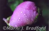 raindrops2474wtmk.jpg