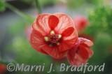 flower4wtmk.jpg