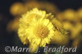 flower3wtmk.jpg