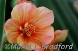 flowerwtmk.jpg